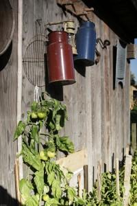 Podręczny ogródek z ziołami