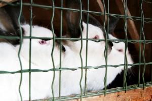Nasze króliczki